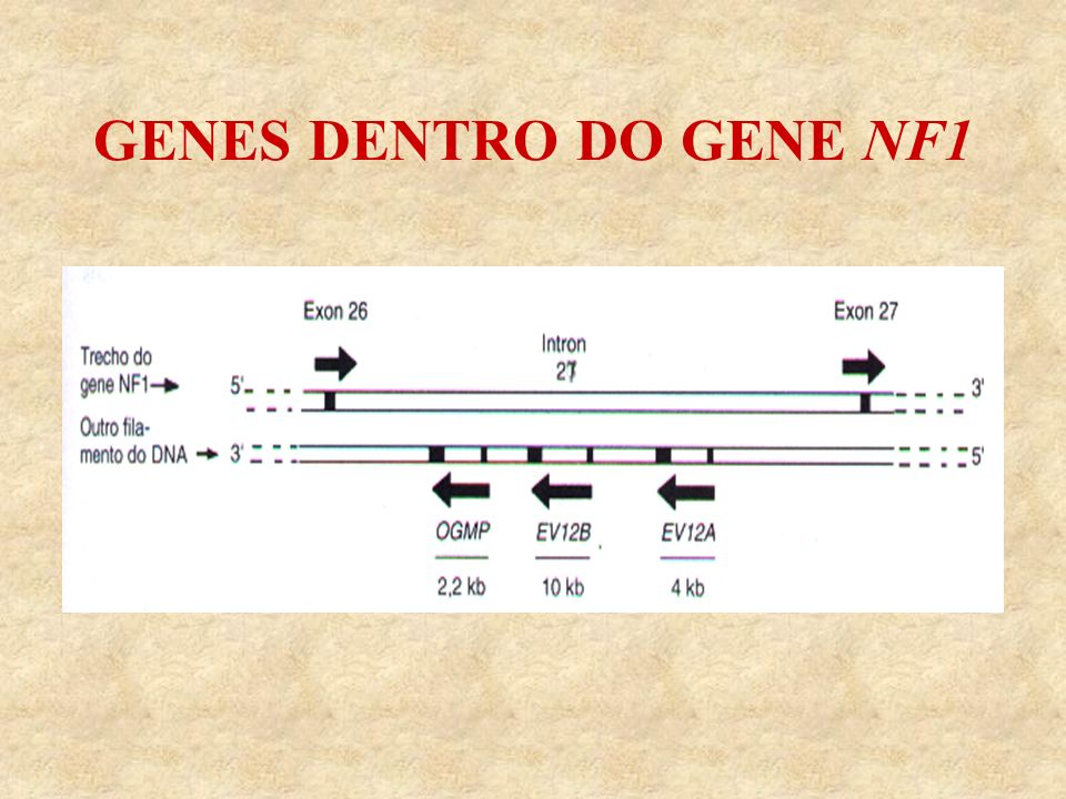 GENES DENTRO DO GENE NF1