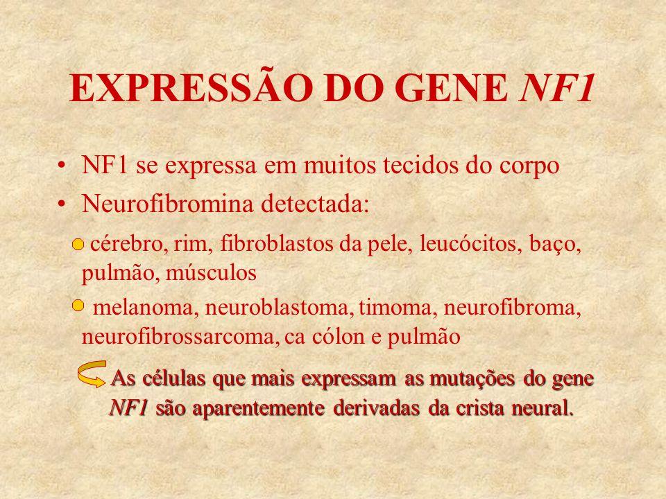 EXPRESSÃO DO GENE NF1 NF1 se expressa em muitos tecidos do corpo