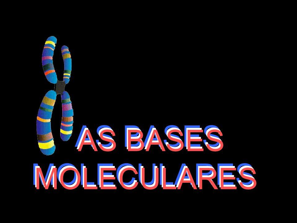 AS BASES MOLECULARES AS BASES MOLECULARES AS BASES MOLECULARES