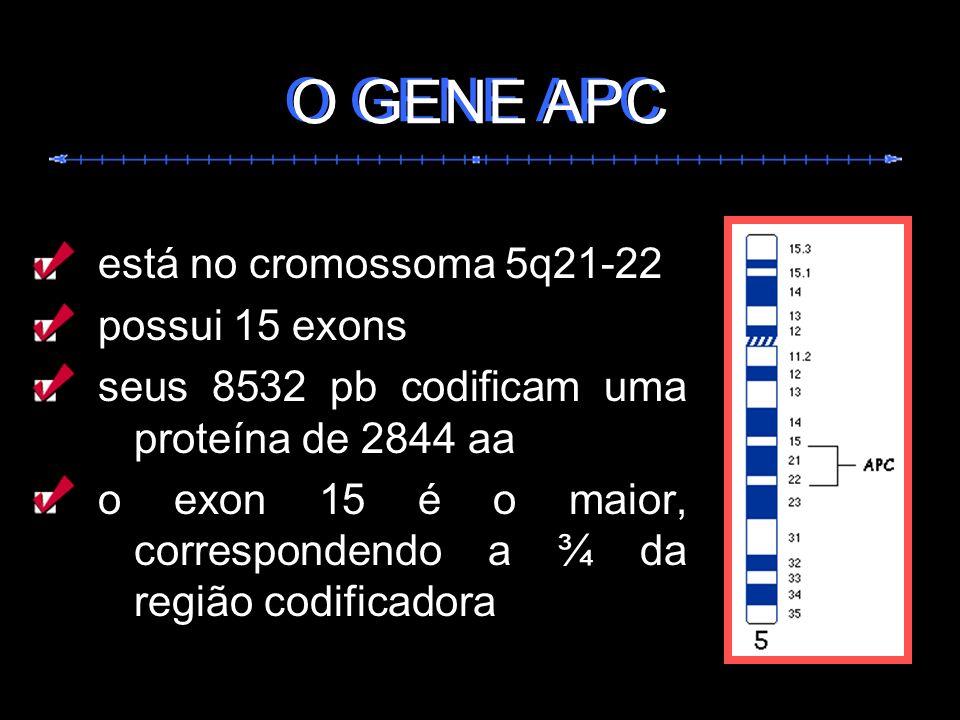 O GENE APC O GENE APC está no cromossoma 5q21-22 possui 15 exons