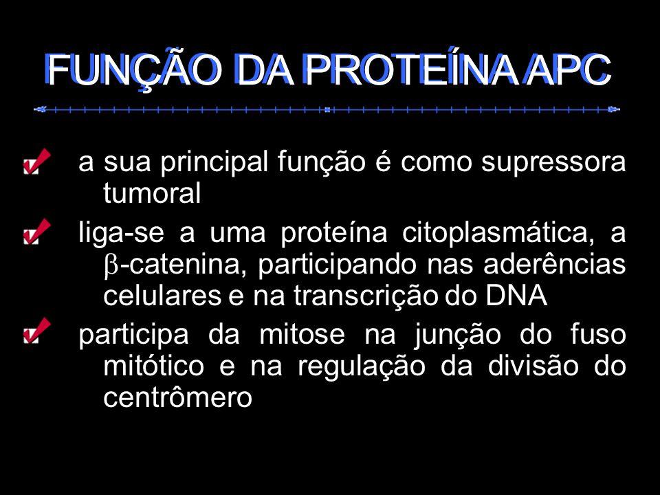 FUNÇÃO DA PROTEÍNA APC FUNÇÃO DA PROTEÍNA APC