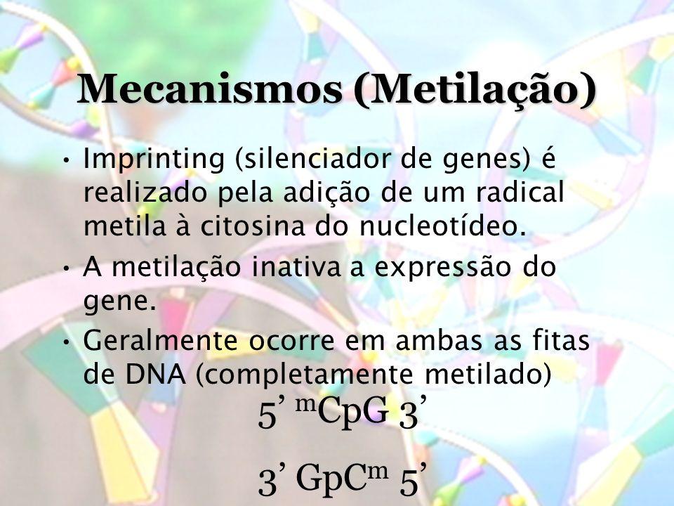 Mecanismos (Metilação)