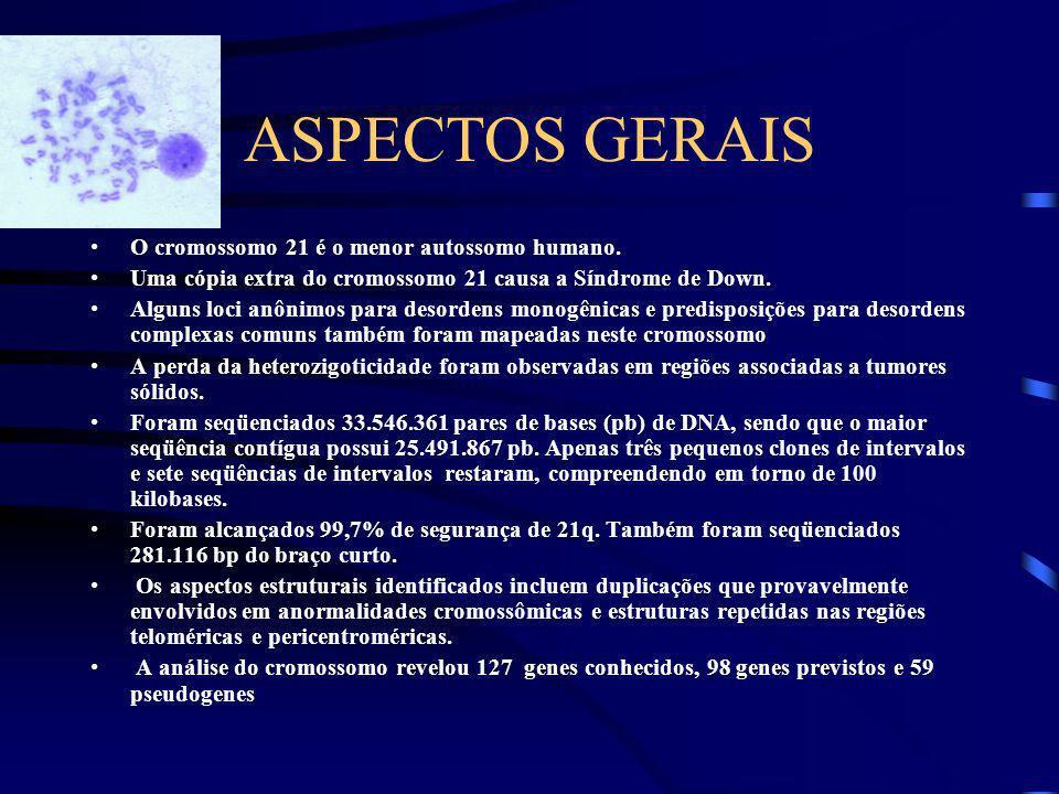 ASPECTOS GERAIS O cromossomo 21 é o menor autossomo humano.