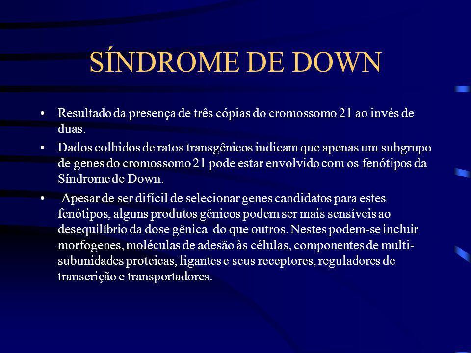 SÍNDROME DE DOWN Resultado da presença de três cópias do cromossomo 21 ao invés de duas.