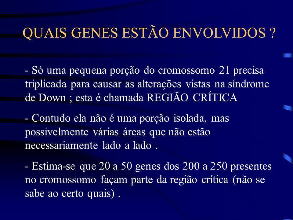 QUAIS GENES ESTÃO ENVOLVIDOS