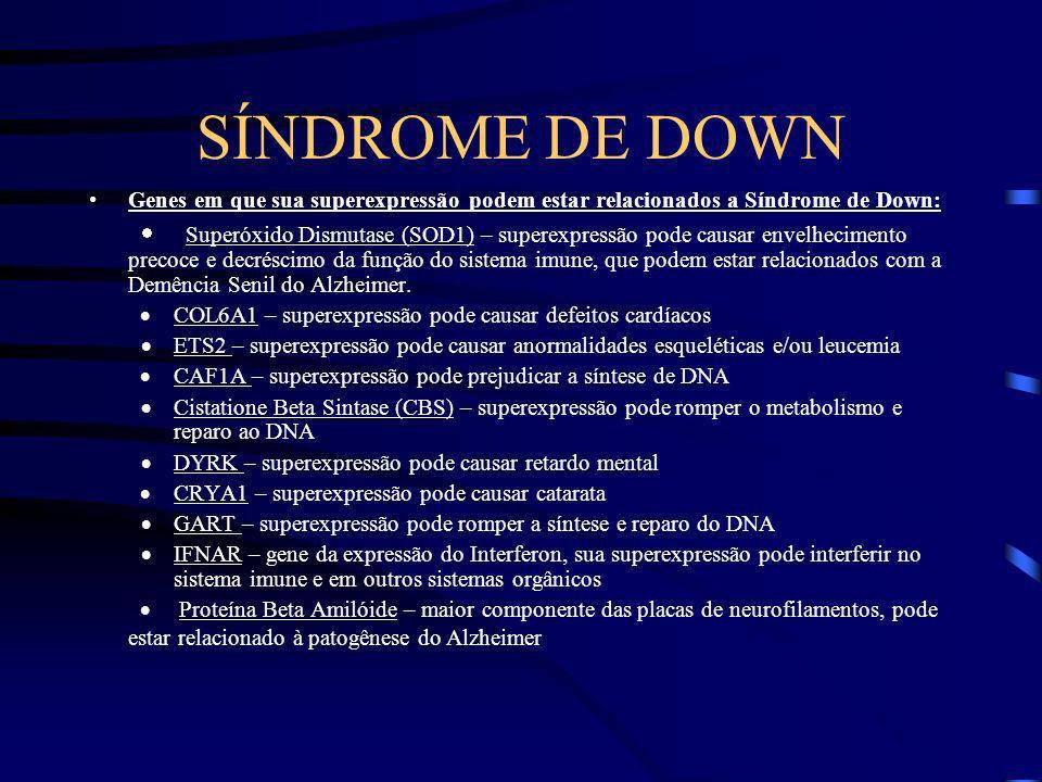 SÍNDROME DE DOWN Genes em que sua superexpressão podem estar relacionados a Síndrome de Down:
