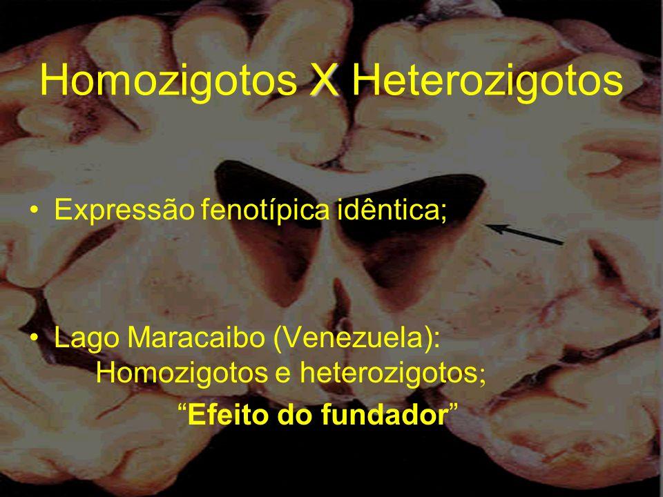 Homozigotos X Heterozigotos