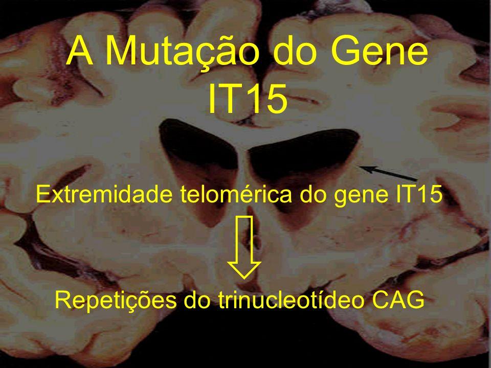 Extremidade telomérica do gene IT15 Repetições do trinucleotídeo CAG