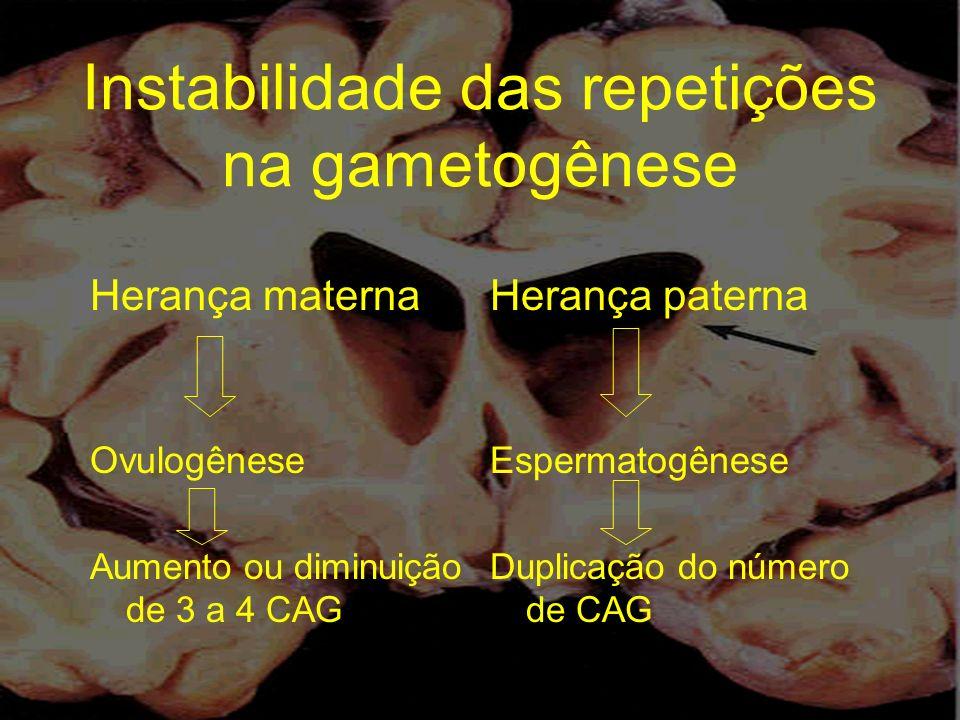Instabilidade das repetições na gametogênese