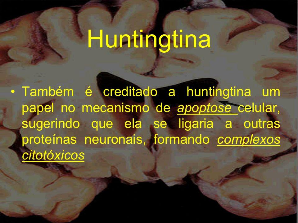 Huntingtina