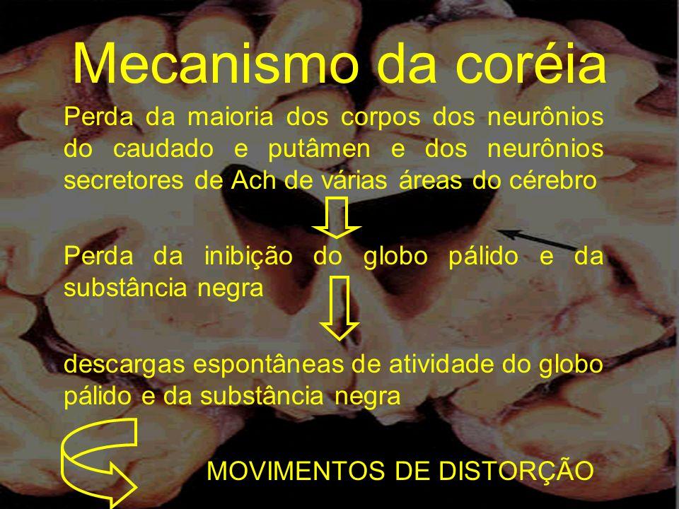 Mecanismo da coréia Perda da maioria dos corpos dos neurônios do caudado e putâmen e dos neurônios secretores de Ach de várias áreas do cérebro.