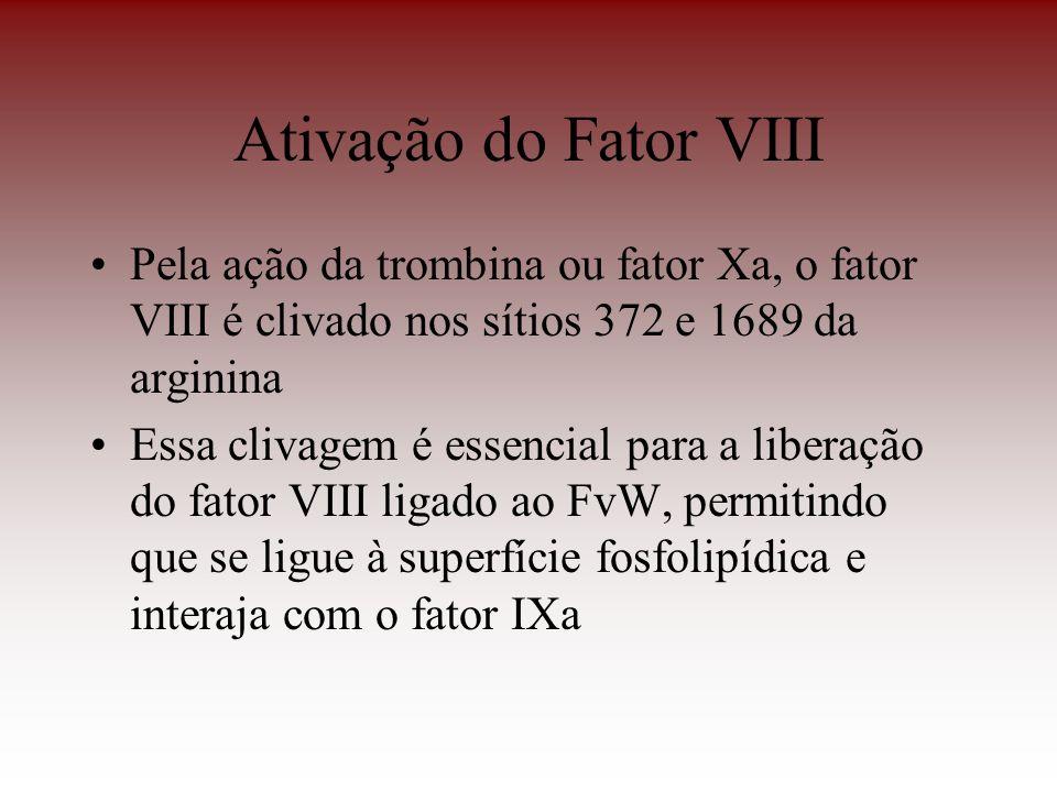 Ativação do Fator VIII Pela ação da trombina ou fator Xa, o fator VIII é clivado nos sítios 372 e 1689 da arginina.