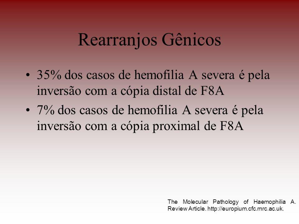 Rearranjos Gênicos 35% dos casos de hemofilia A severa é pela inversão com a cópia distal de F8A.