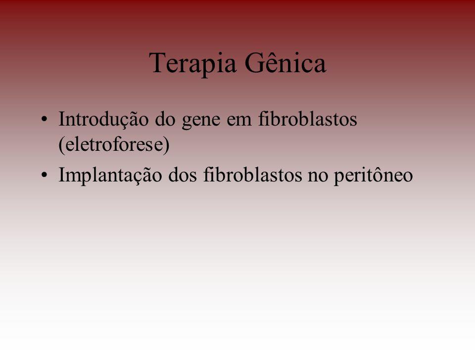 Terapia Gênica Introdução do gene em fibroblastos (eletroforese)