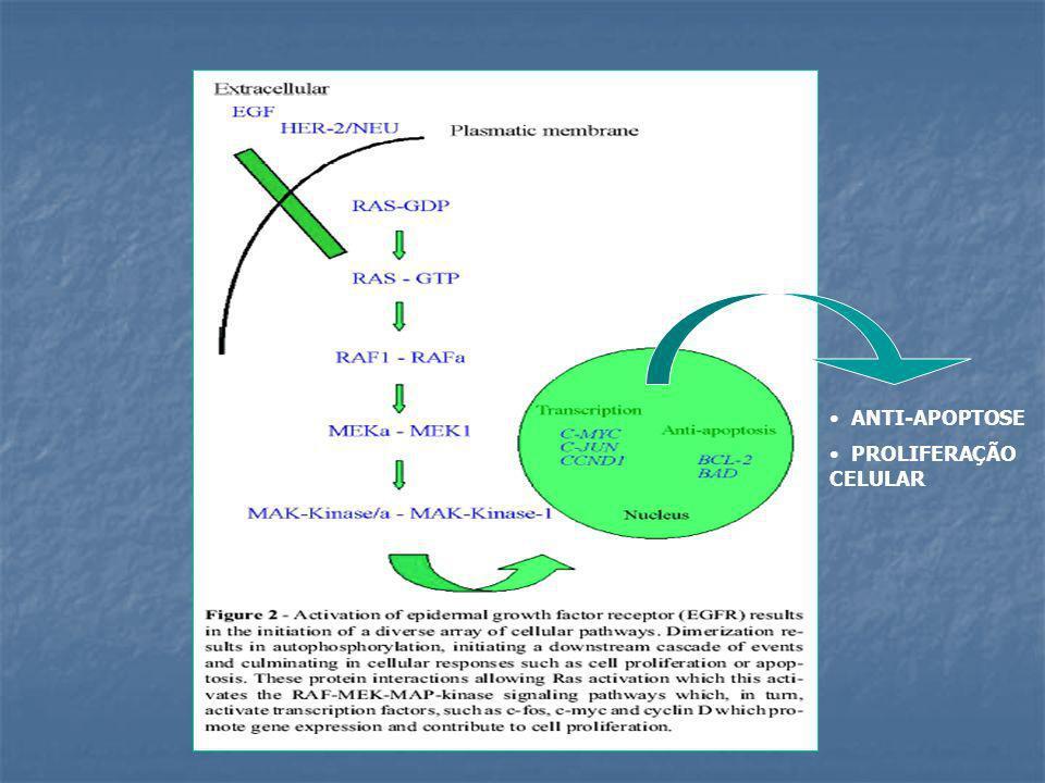 ANTI-APOPTOSE PROLIFERAÇÃO CELULAR