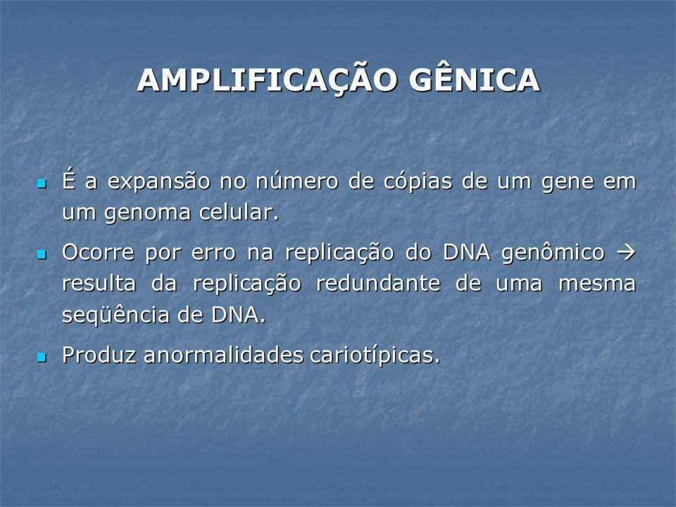 AMPLIFICAÇÃO GÊNICA É a expansão no número de cópias de um gene em um genoma celular.