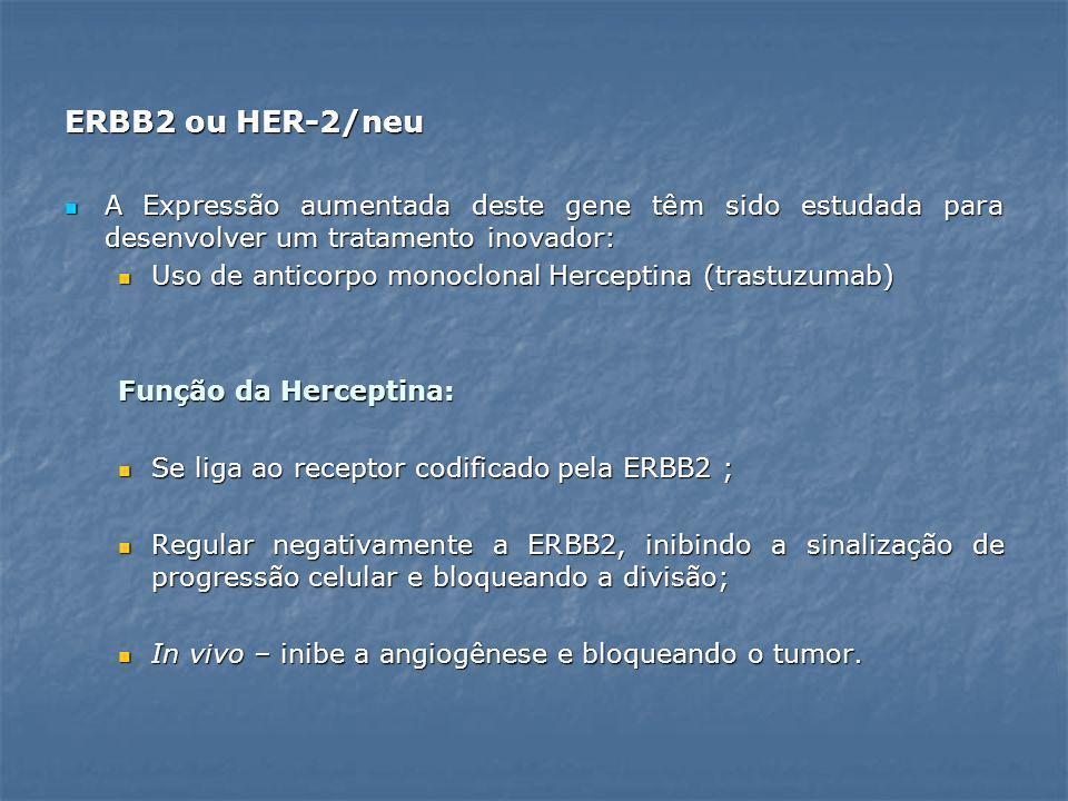 ERBB2 ou HER-2/neu A Expressão aumentada deste gene têm sido estudada para desenvolver um tratamento inovador: