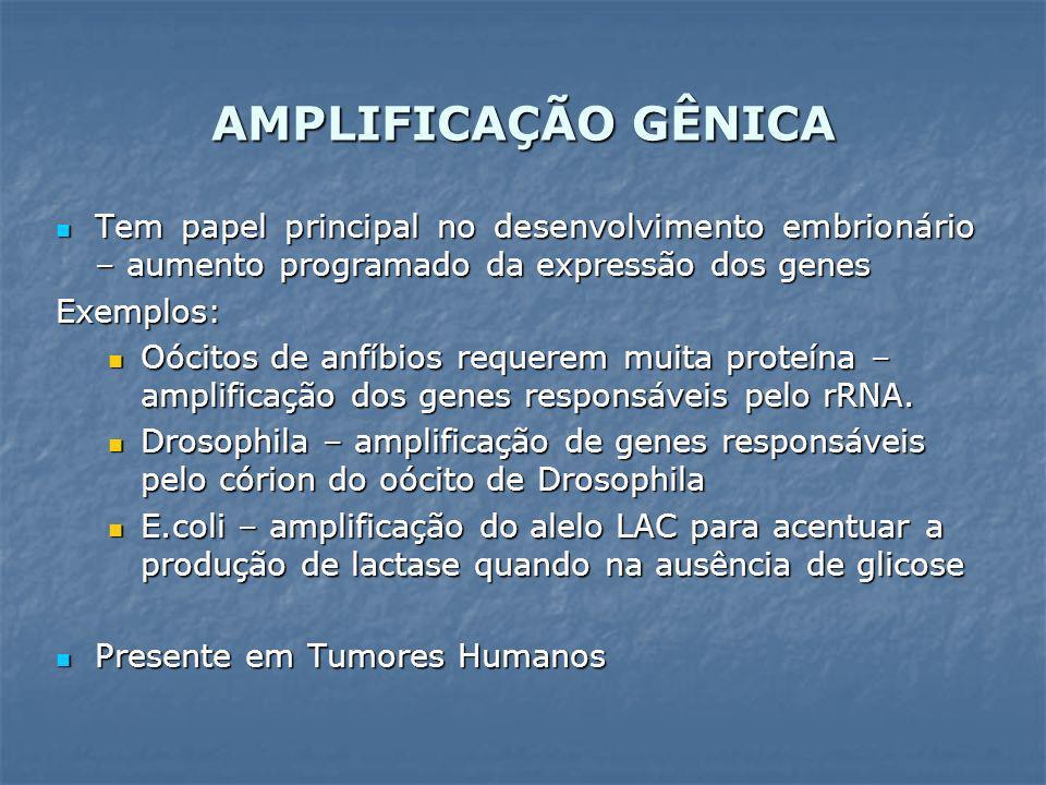 AMPLIFICAÇÃO GÊNICA Tem papel principal no desenvolvimento embrionário – aumento programado da expressão dos genes.
