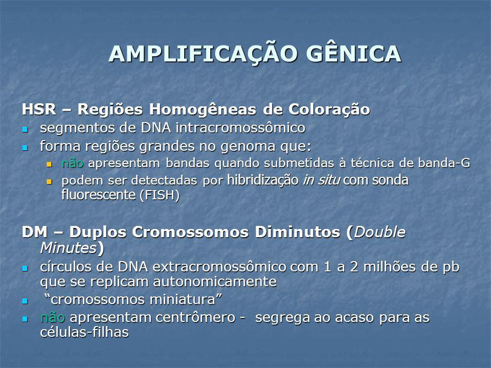 AMPLIFICAÇÃO GÊNICA HSR – Regiões Homogêneas de Coloração