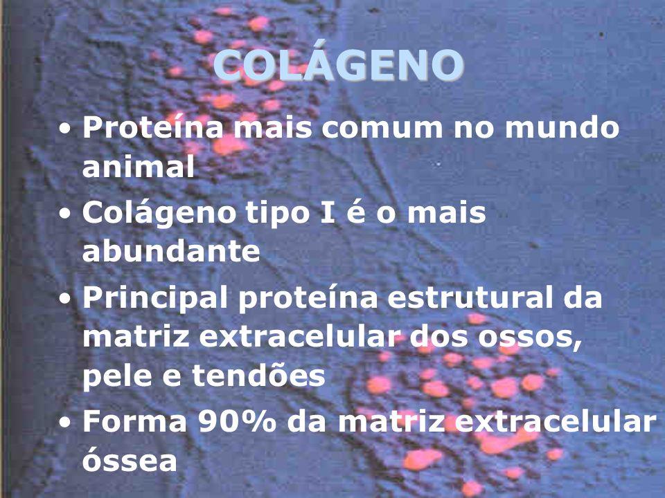 COLÁGENO Proteína mais comum no mundo animal
