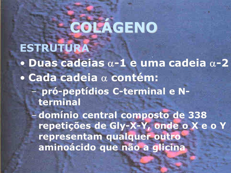 COLÁGENO ESTRUTURA Duas cadeias -1 e uma cadeia -2