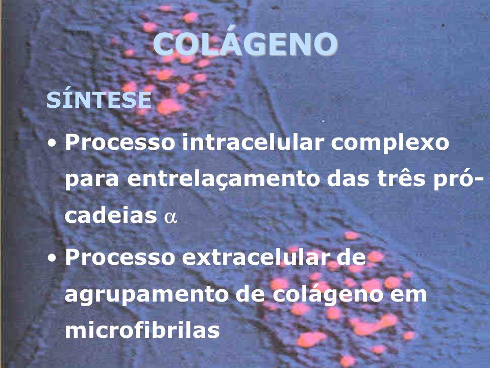 COLÁGENO SÍNTESE. Processo intracelular complexo para entrelaçamento das três pró-cadeias 