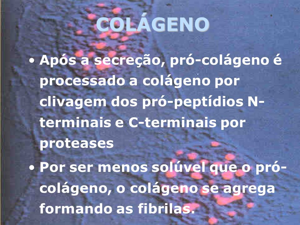 COLÁGENO Após a secreção, pró-colágeno é processado a colágeno por clivagem dos pró-peptídios N-terminais e C-terminais por proteases.