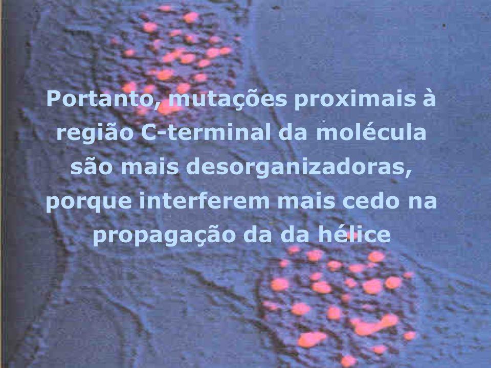 Portanto, mutações proximais à região C-terminal da molécula são mais desorganizadoras, porque interferem mais cedo na propagação da da hélice