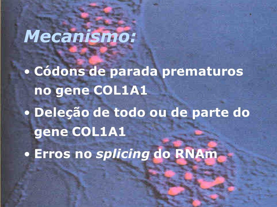 Mecanismo: Códons de parada prematuros no gene COL1A1