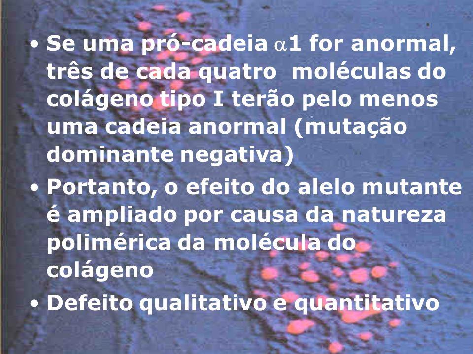Se uma pró-cadeia 1 for anormal, três de cada quatro moléculas do colágeno tipo I terão pelo menos uma cadeia anormal (mutação dominante negativa)