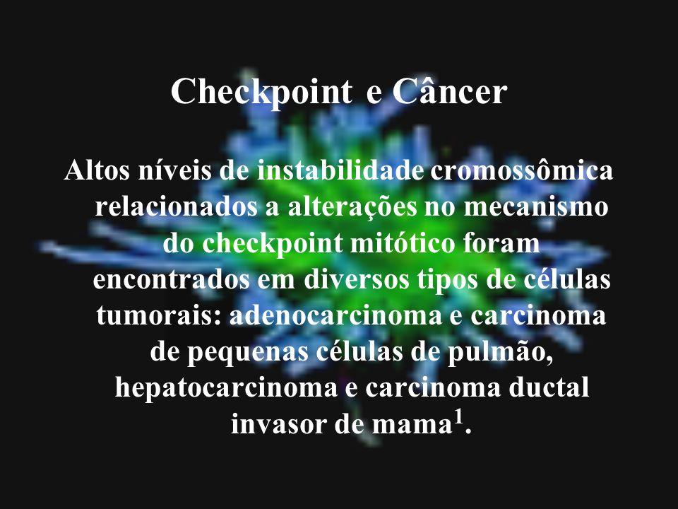 Checkpoint e Câncer