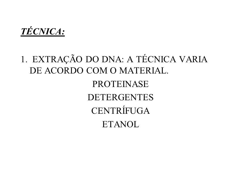 TÉCNICA: 1. EXTRAÇÃO DO DNA: A TÉCNICA VARIA DE ACORDO COM O MATERIAL. PROTEINASE. DETERGENTES. CENTRÍFUGA.