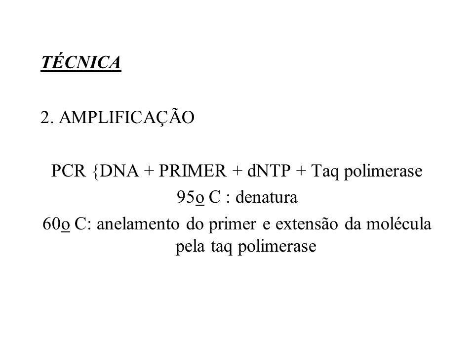PCR {DNA + PRIMER + dNTP + Taq polimerase 95o C : denatura
