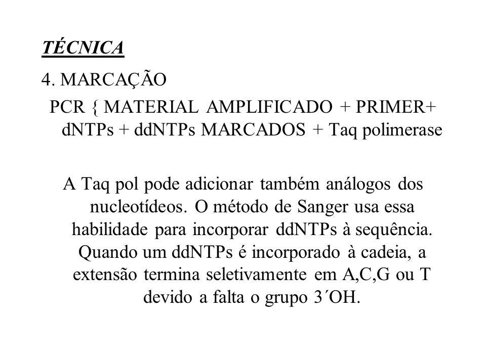 TÉCNICA 4. MARCAÇÃO. PCR { MATERIAL AMPLIFICADO + PRIMER+ dNTPs + ddNTPs MARCADOS + Taq polimerase.