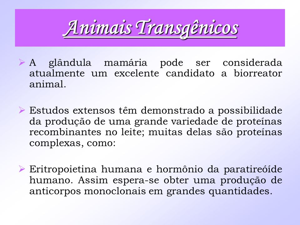Animais Transgênicos A glândula mamária pode ser considerada atualmente um excelente candidato a biorreator animal.