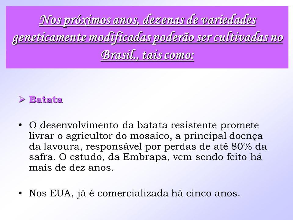 Nos próximos anos, dezenas de variedades geneticamente modificadas poderão ser cultivadas no Brasil., tais como: