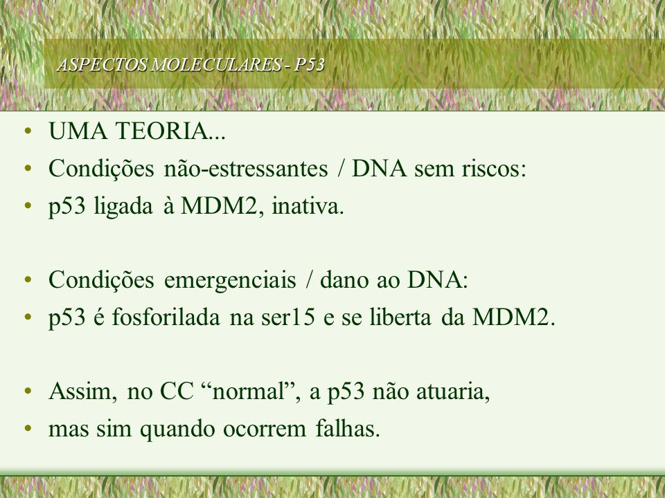 ASPECTOS MOLECULARES - P53