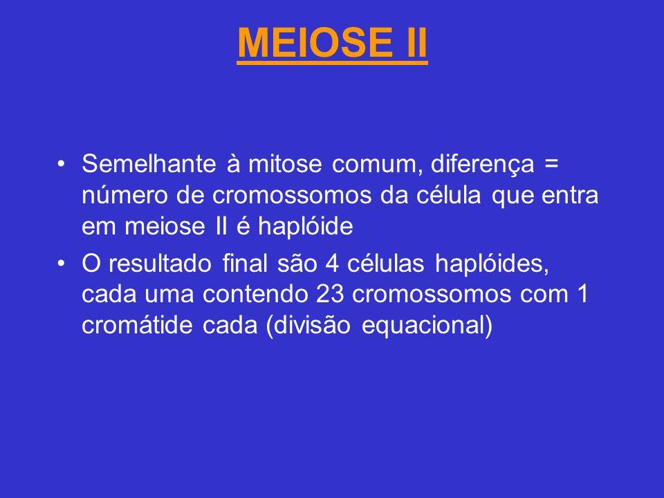 MEIOSE II Semelhante à mitose comum, diferença = número de cromossomos da célula que entra em meiose II é haplóide.