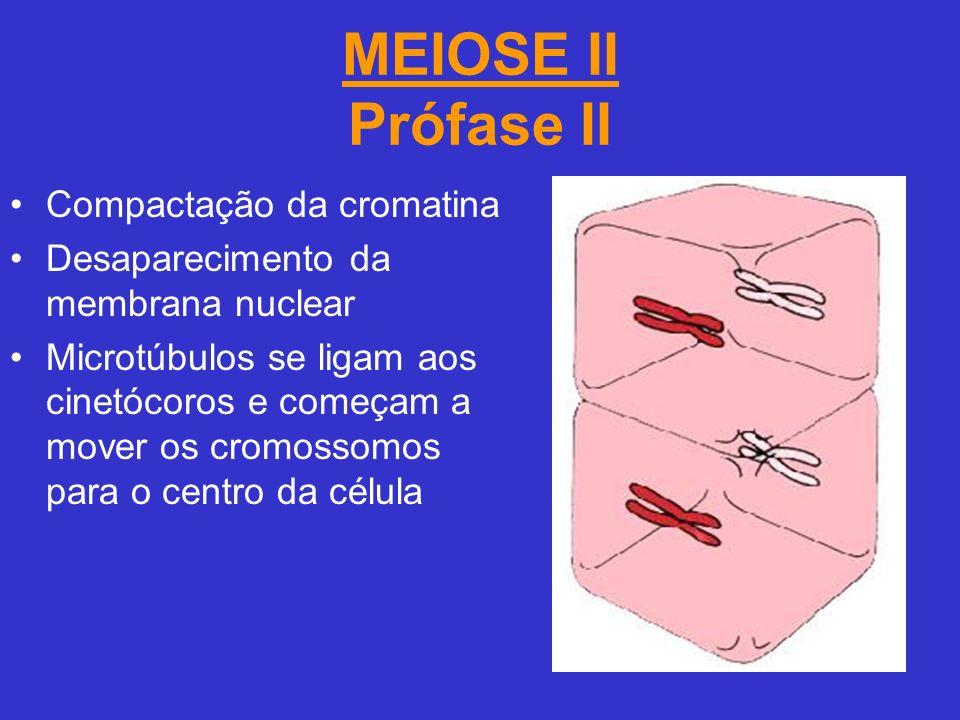 MEIOSE II Prófase II Compactação da cromatina