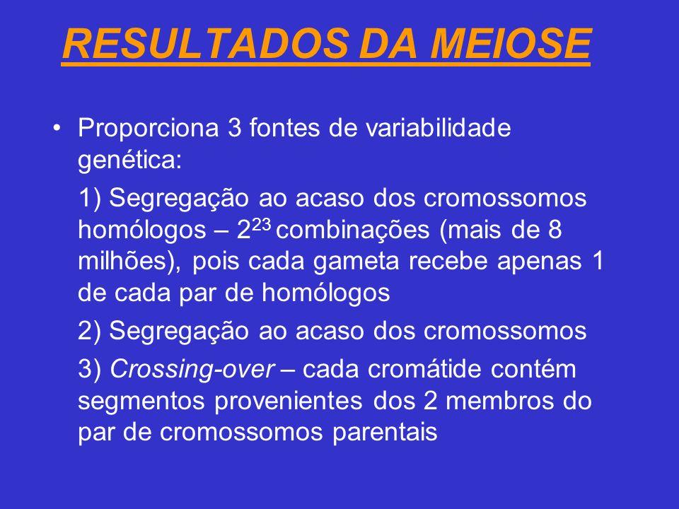 RESULTADOS DA MEIOSE Proporciona 3 fontes de variabilidade genética: