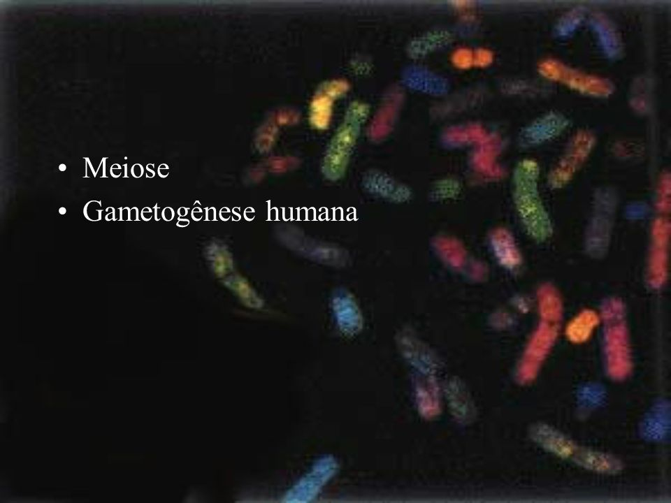 Meiose Gametogênese humana