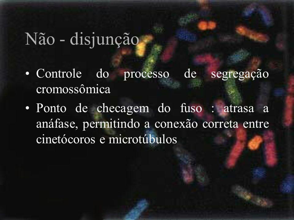 Não - disjunção Controle do processo de segregação cromossômica