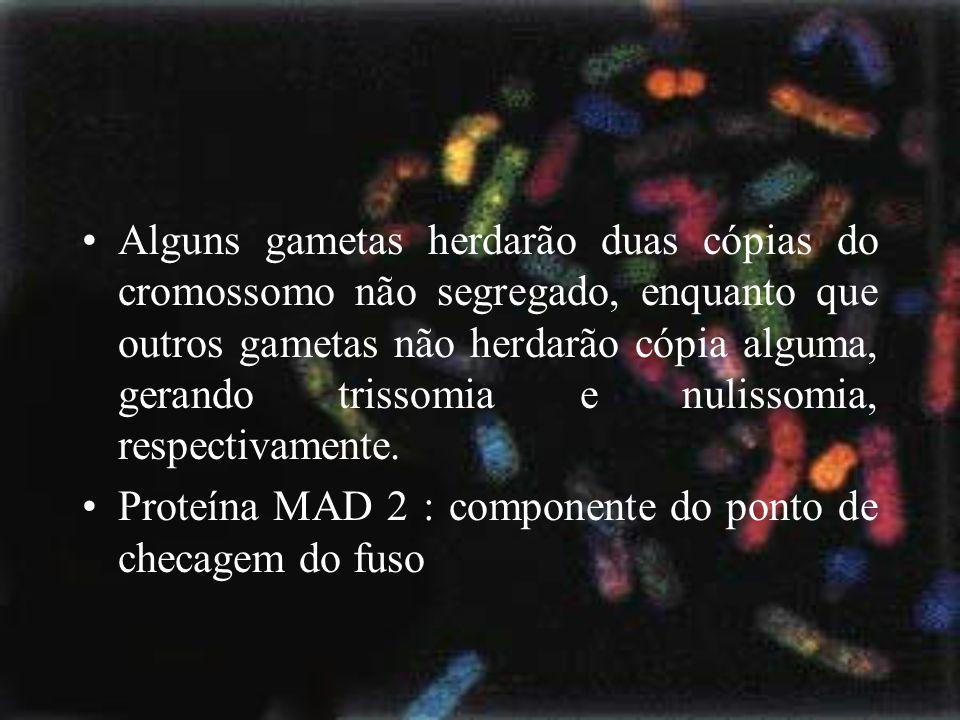 Alguns gametas herdarão duas cópias do cromossomo não segregado, enquanto que outros gametas não herdarão cópia alguma, gerando trissomia e nulissomia, respectivamente.