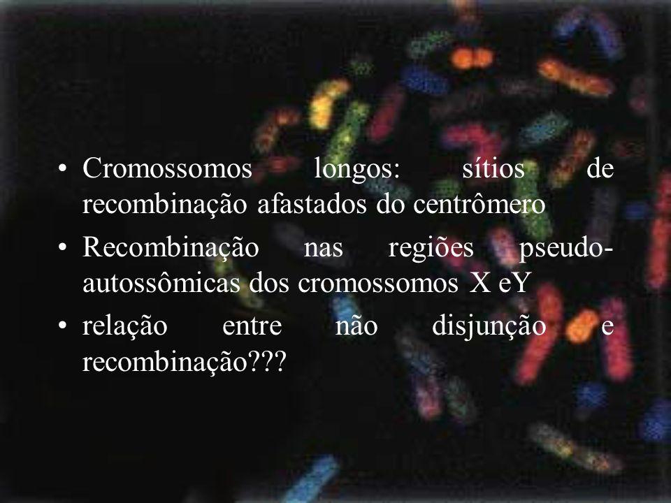 Cromossomos longos: sítios de recombinação afastados do centrômero