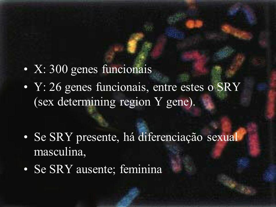 X: 300 genes funcionais Y: 26 genes funcionais, entre estes o SRY (sex determining region Y gene).