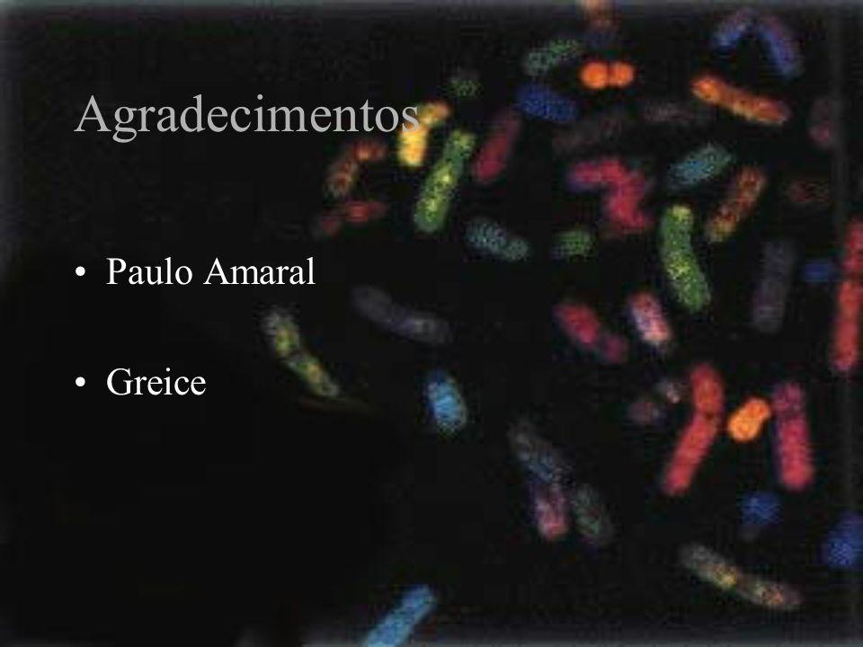 Agradecimentos Paulo Amaral Greice