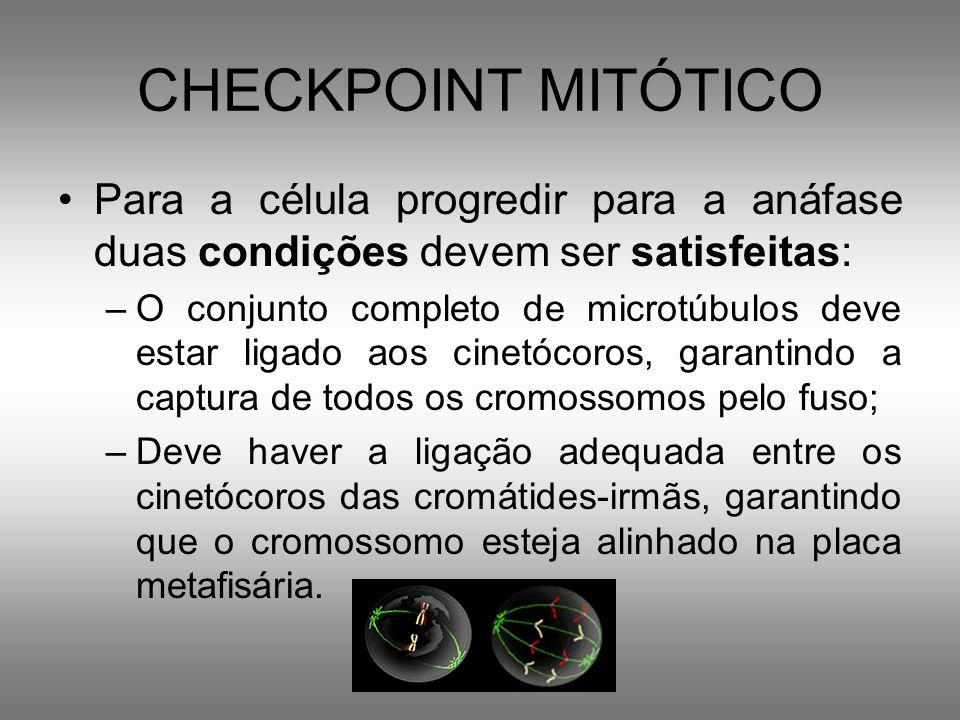 CHECKPOINT MITÓTICO Para a célula progredir para a anáfase duas condições devem ser satisfeitas: