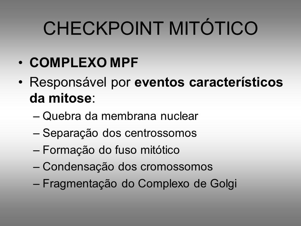 CHECKPOINT MITÓTICO COMPLEXO MPF
