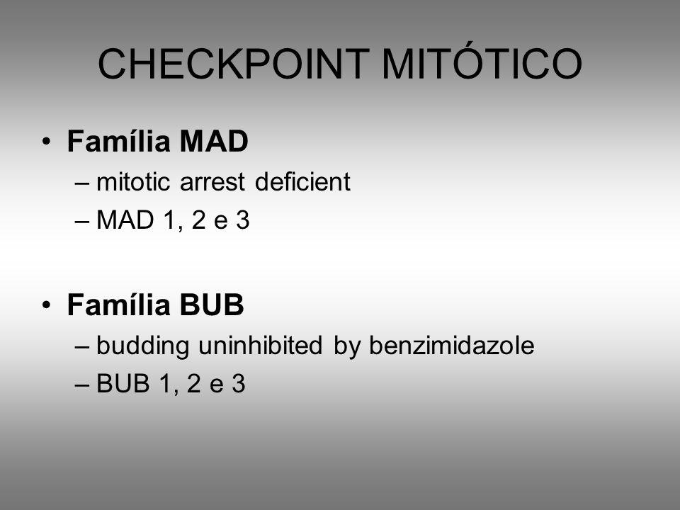 CHECKPOINT MITÓTICO Família MAD Família BUB mitotic arrest deficient