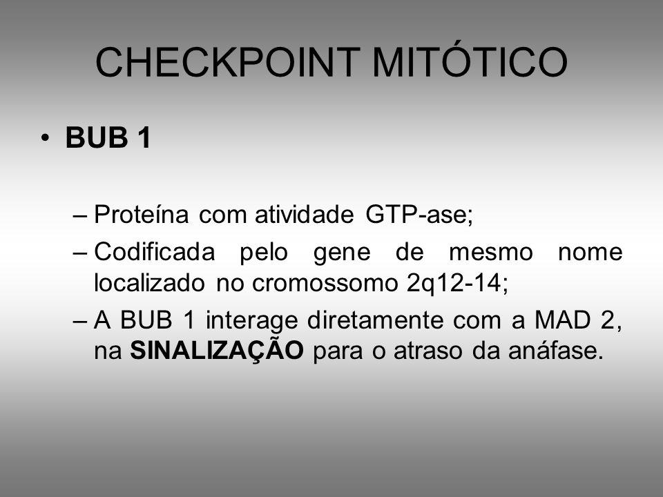 CHECKPOINT MITÓTICO BUB 1 Proteína com atividade GTP-ase;